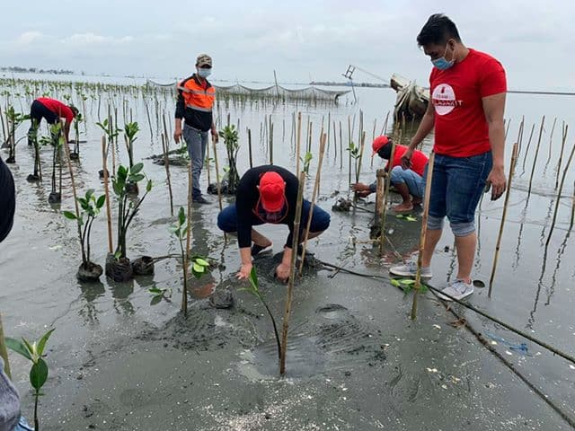 San Miguel Corporation (SMC) Begins Massive Mangrove Planting in Bulacan (SMC Press Release July 29, 2020) 1