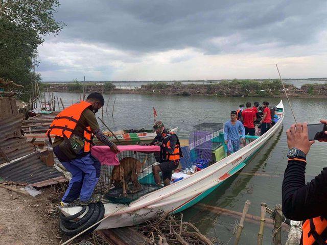 SMC, Animal Kingdom rescue abandoned animals in Taliptip, Bulakan 2