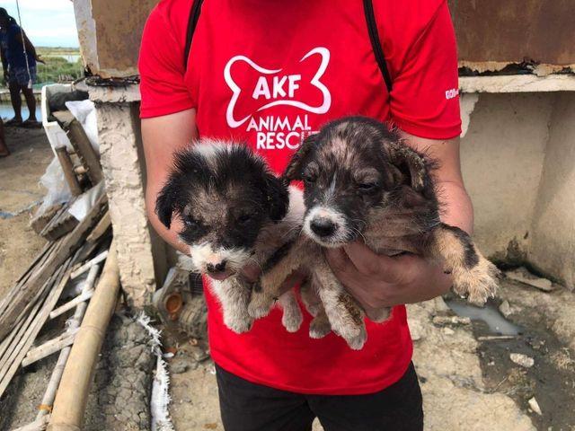 Animal Kingdom Foundation (AKF)